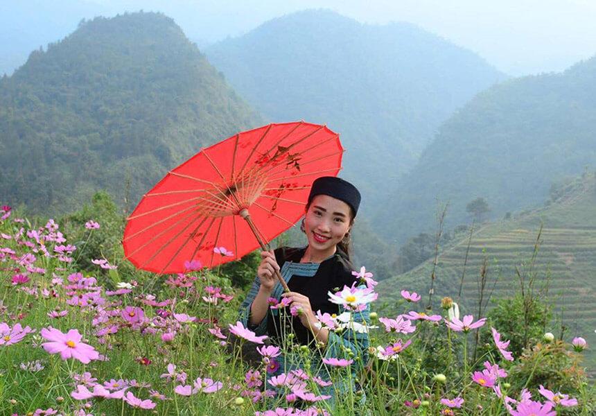 hoa cúc nhái sapa