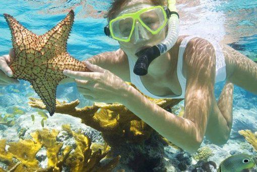 tour lặn ngắm san hô ở đảo phú quốc