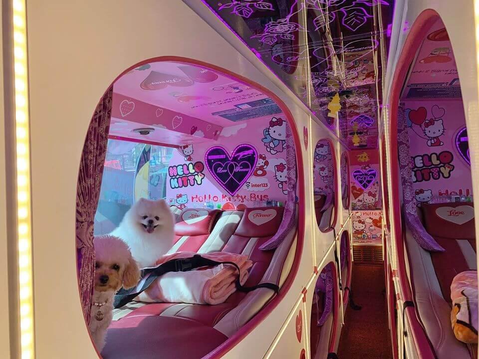 cabin xe khách giường nằm hello kitty