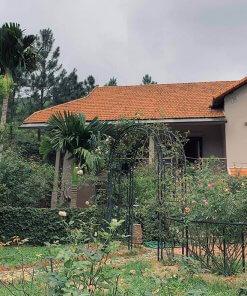 cỏ villa sóc sơn