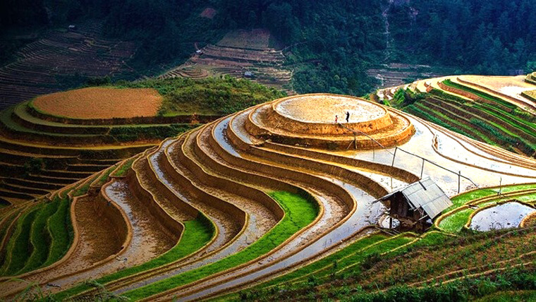 mù cang chải mùa cấy lúa